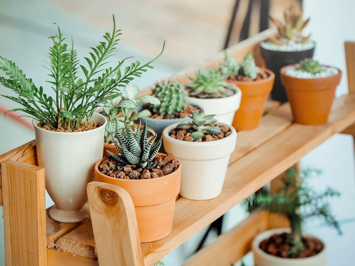 So überleben Pflanzen die Urlaubszeit unbeschadet