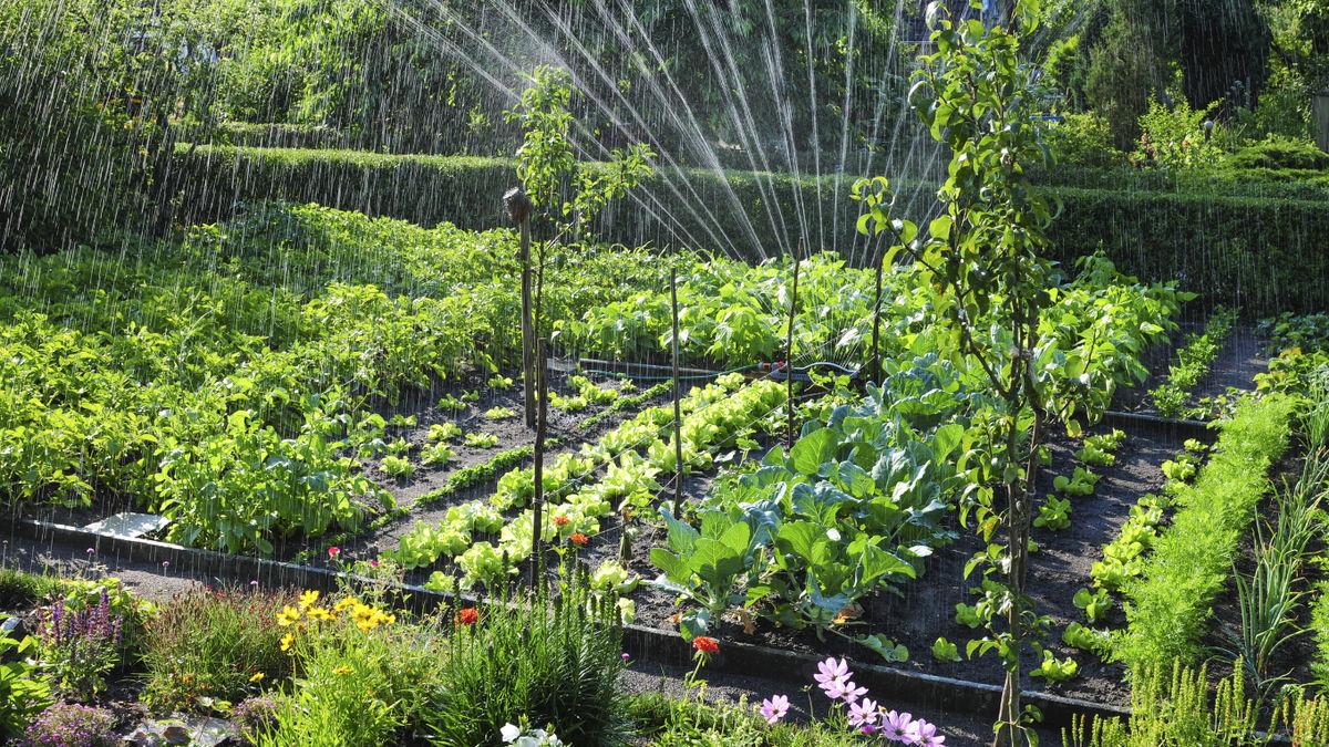 Garten hitzetauglich machen: Tipps bei Trockenheit und Hitze